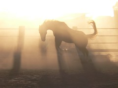 Unbridled Joy (ihatefog) Tags: horse sunrise rusty buck quarterhorse myhometown anawesomeshot