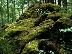 Mossy Pile (mcmillend) Tags: washington moss northcascades rosslakenationalrecreationarea