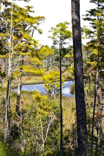Sandhill Crane NWR Bayou