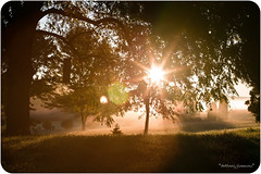 """""""Spend five minutes at the beginning of each day..."""" (Sunflare Orange) Tags: morning autumn trees light sun sunlight fall home nature grass fog yard countryside early am michigan country sunburst sunbeam sunflare"""