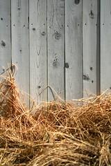 hay fence - by Shazz Mack
