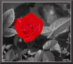 A cor nos teus olhos...