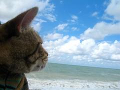Milhaud à la mer - by courambel