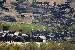 sudafrica kruger