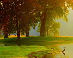 Splendor... (~M~Chelle & her view***) Tags: park autumn trees usa lake bird fall heron nature beauty natural mo missouri ozarks breathtaking taneycomo taneycounty platinumphoto anawesomeshot impressedbeauty aplusphoto ultimateshot onlyyourbestshots frhwofavs bransonarea ~m~chelle trilakesarea