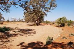 Wide sandy creek (Chris BH) Tags: creek gum sand dry australia brokenhill