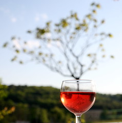 Vin (hey mr glen) Tags: holiday france reflection tree relax outside countryside wine dord