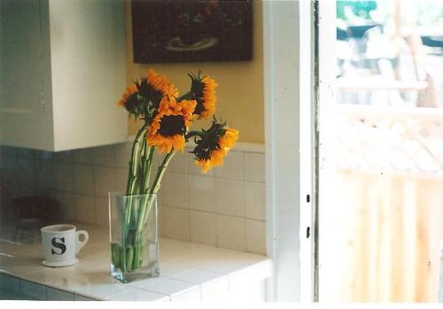 sunflowerspbr 003