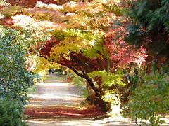 Maple Dreams (Arkadious) Tags: wood autumn trees red colour tree fall nature leaves forest leaf maple woods october poland polska arboretum natura bory jesień przyroda drzewo drzewa klon rogow bór lodzkie rogów klonpalmowy woodsdrzewa