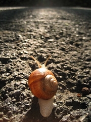 On the road again (peter_panamint) Tags: road snail schnecke caracol chiocciola limace  csiga  canonixus60 anawesomeshot aplusphoto