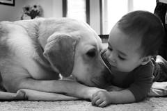 New Best Friends - by WisDoc