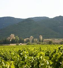 Grans Muralles Vineyard