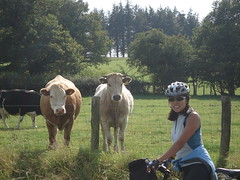 Welsh Wildlife (will_cyclist) Tags: wales cycling cows wales2007 cowsx