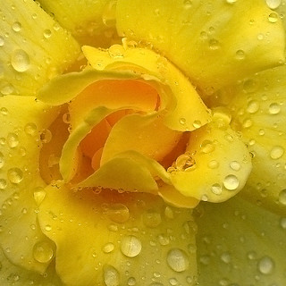 Rain Today