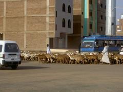 khartoum traffic jam (margherappy) Tags: sudan souk missioneumanitaria alelujabasicschool bimbomamoura