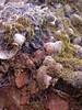 boei (malyann) Tags: macro terschelling mos web natuur schelpen spinnenweb boei shelp stapelingen