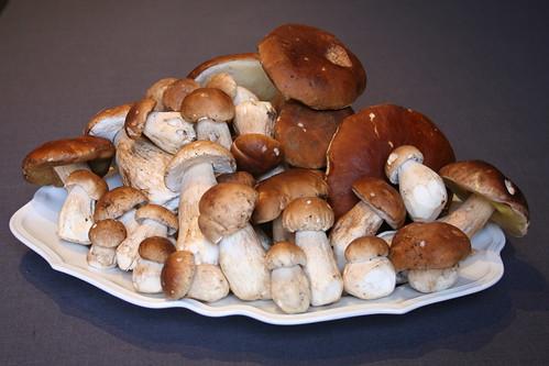 Temporada de hongos en San Ignacio