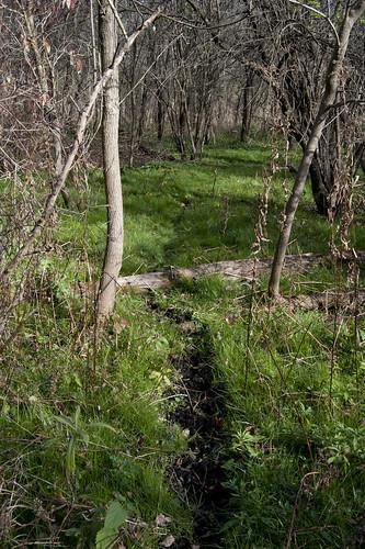 Deer Trail II