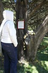 Pfeiffer Beach Tree (Ape Do Good Screen Printing) Tags: bigsur pfeifferbeach