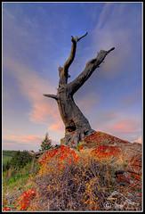 Weathering TIme (lundbrecktree2_DSD6039.jpg) (Larsthrows) Tags: sunset tree clouds lichen lundbreckfalls larssteinke superbmasterpiece lunbreck larsphotography larsphotographycom lawrencesteinke