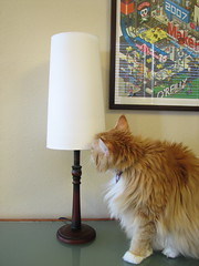 Jellybean inspects the lampshade