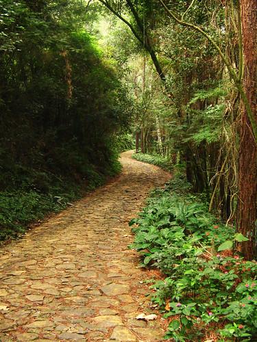 Floresta dos Gnomos by patrícia soransso.