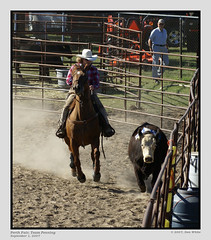 dsc06446-cr (Don White Photography) Tags: horses cowboys team competition perth cutting cowgirls 2007 riders penning teampenning horsesatwork carpfair perthfair donwhite