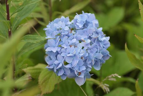 Flower at Katsura Campus 2