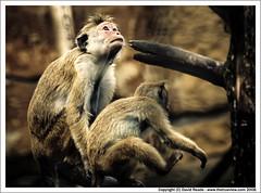 Monkey Life (C) August 2006