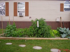 Garden July 3