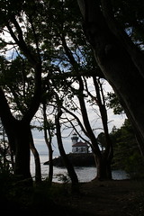 Lighthouse Through Trees - Lime Kiln Point State Park