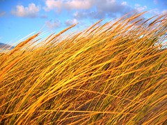 Gold! (hugo n.) Tags: sunset portugal gold wind dune dourado prdosol duna guincho