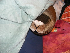 stuffed otter with blankets (JimmyMac210 - just returned home from hospital) Tags: stuffed shirts otter towels
