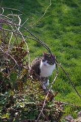 IMGP0435 (elvis_hitler2000) Tags: ireland graveyard cat dingle kerry aficionados justpentax