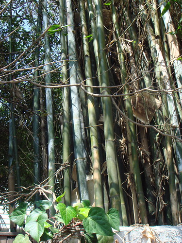 walk street bamboo forest