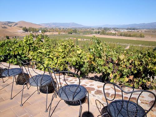 DSC24928, Viansa Vineyards & Winery, Sonoma Valley, California, USA