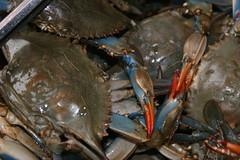 granchi cinesi (gepiblu) Tags: new york usa newyork america unitedstates crab states crabs cinesi cinese cangrejos cangrejo granchio granchi gepiblu