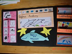 dolphin lapbook inside