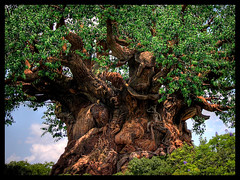 Tree of Life (twoblueday) Tags: orlando florida waltdisneyworld animalkingdom treeoflife hdr3exp