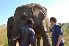 DSC_0822.JPG (kamlan) Tags: animals lionpark kwazulunatal zoologicalgardens