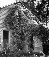 """Nature reclaims what is hers."" (McMorr) Tags: old family house abandoned home overgrown rural farm country neglected eerie iowa spooky forgotten weathered disused homestead discarded forsaken deserted abused fallingapart creativenonfiction mcmorr"