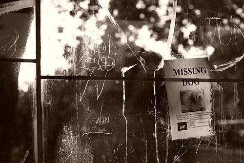 Missing Dog 3479