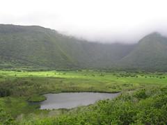 IMG_2630 (dacky2) Tags: hawaii bigisland waipio