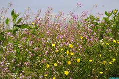 LaBallonaWetlands51 (mcshots) Tags: california flowers trees plants usa coast losangeles spring stock socal wetlands mcshots mdr pdr laballonawetlands