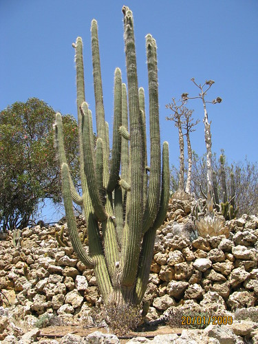 Outdoor cactus garden in riverland 4607836324_9d74b7b2c1