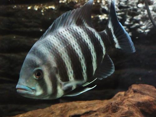 IMG_0784 Fish