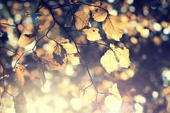 Luz (oo Felix oo) Tags: autumn light luz yellow forest atardecer nikon sundown bokeh magic dream happiness amarillo flare otoño felicidad ilusion sueño magia enviroment ecologist d700 felmar