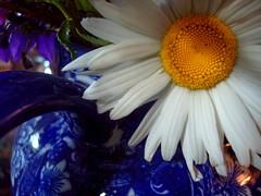 Daisy and Blue&White China
