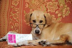 Der Jane Austen Fachmann (Pixelkids) Tags: dog chien buch reader hund anton brille janeausten leseratte podencomischling