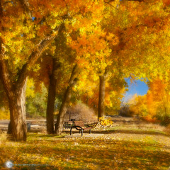 Sit With Me Beneath The Tree ... (Aspenbreeze) Tags: autumn trees leaves bench colorado bluesky autumncolors fallingleaves foilage lepetitprince nautre fallseason cottonwoodtrees colorphotoaward saariysqualitypictures imagesforthelittleprince coth5 aspenbreeze